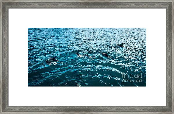 Dolphins Off Of The Na Pali Coast Framed Print