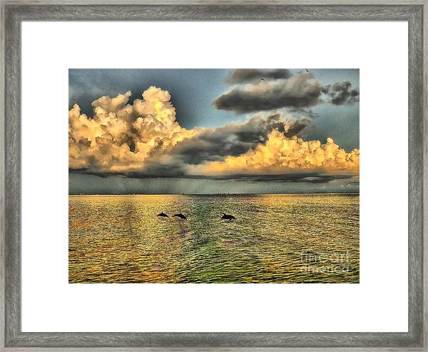 Dolphins Play At Sanibel Island Framed Print