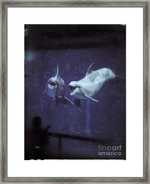 Dolphinspiration Framed Print