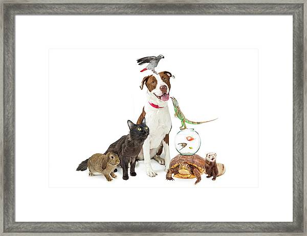 Domestic Pets Group Together With Copy Space Framed Print