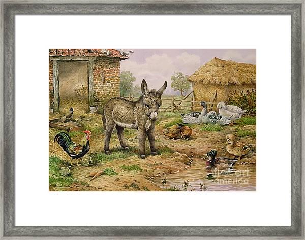 Donkey And Farmyard Fowl  Framed Print