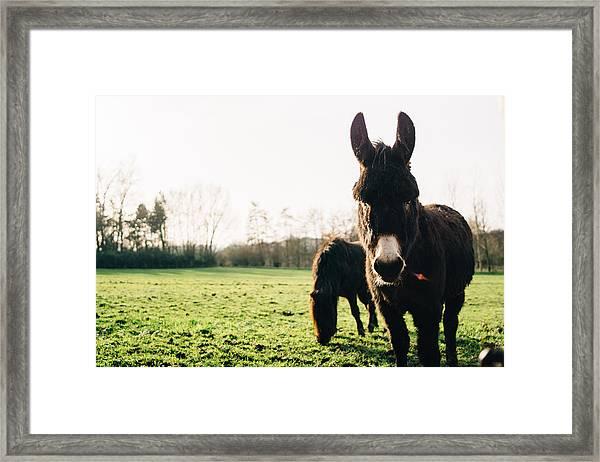 Donkey And Pony Framed Print