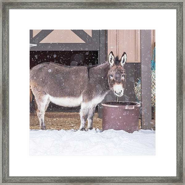 Donkey Watching It Snow Framed Print