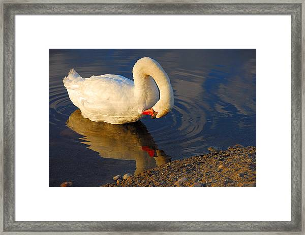 Don't Hate Me  Cause I'm Beautiful Framed Print