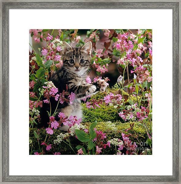 Don't Pick The Flowers Framed Print
