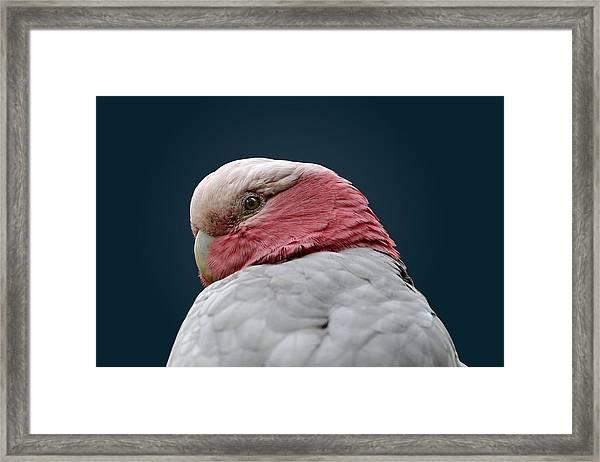Don't Sneak Up On Me Framed Print