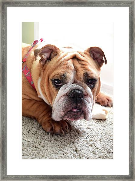 Don't Touch My Bone Framed Print