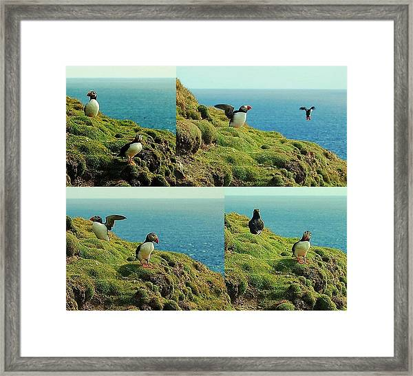 Framed Print featuring the photograph Double Act by HweeYen Ong