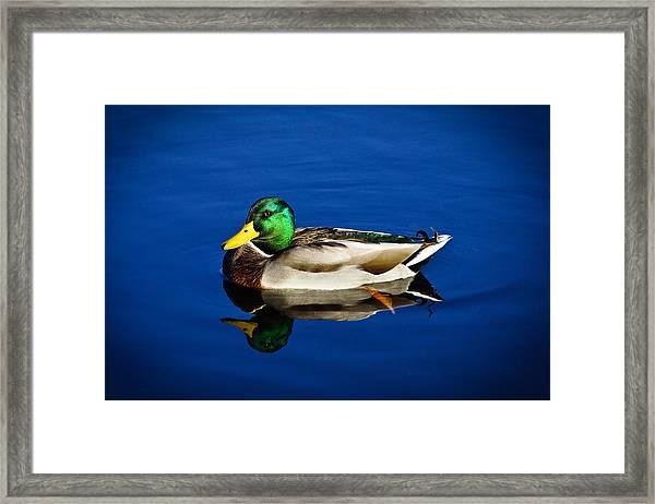 Double Duck Framed Print