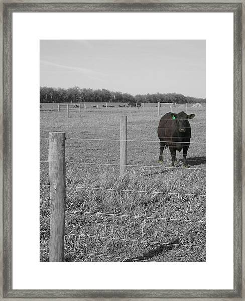 Framed Print featuring the photograph Double Post by Dylan Punke