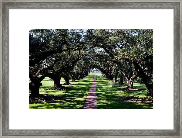 Down The Path Framed Print