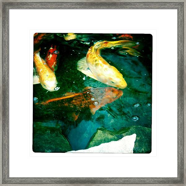 Downstream 3 Framed Print