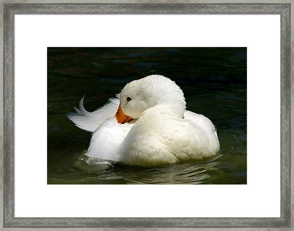 Downy Soft Framed Print