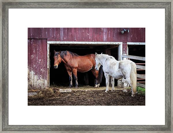 Draft Horses Framed Print