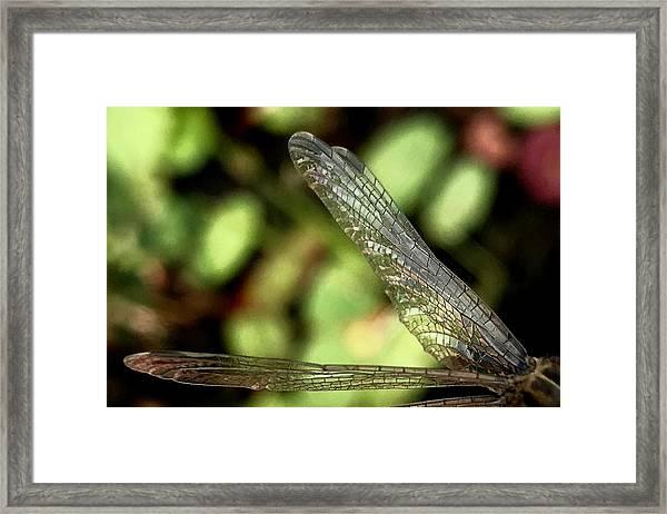Dragon Fly Wings Framed Print