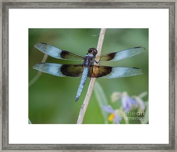 Dragonfly 12 Framed Print