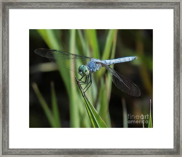 Dragonfly 13 Framed Print