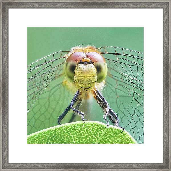 Dragonfly Face Framed Print by Jim Hughes
