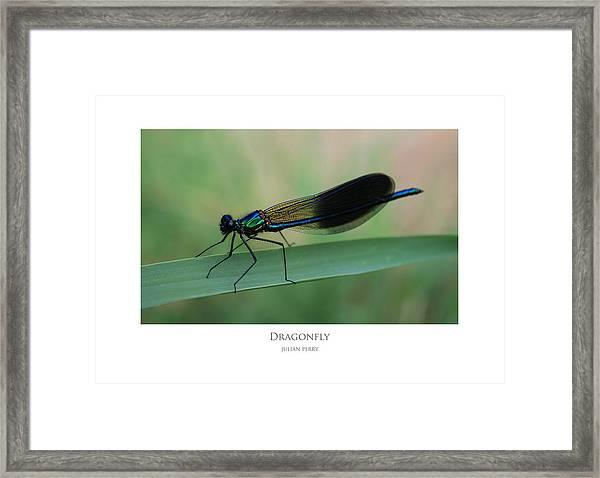 Dragonfly Framed Print