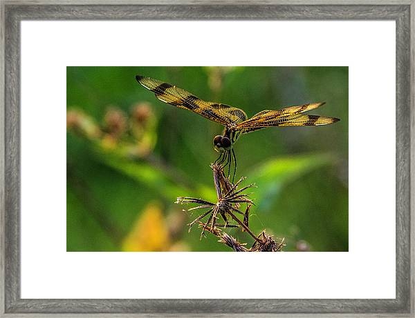 Dragonfly Resting On Flower Framed Print