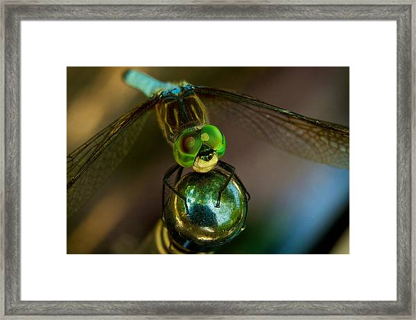 Framed Print featuring the photograph Dragonfly by William Jobes