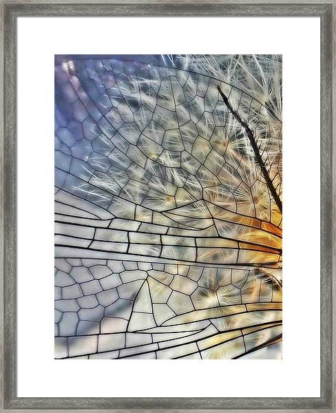 Dragonfly Wing Framed Print