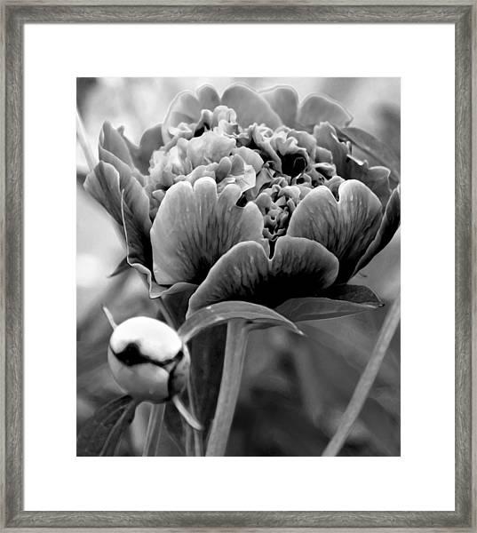 Drama In The Garden Framed Print