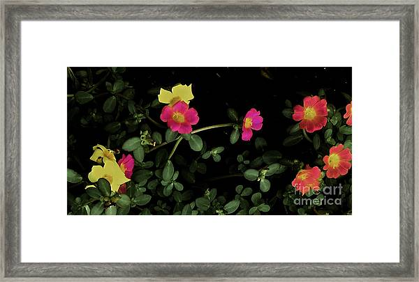 Dramatic Colorful Flowers Framed Print