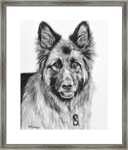 Drawing Of A Long-haired German Shepherd Framed Print