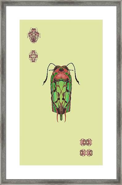 Dread Bug Specimen Framed Print