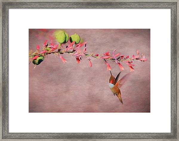 Dreamin' In Pink Framed Print