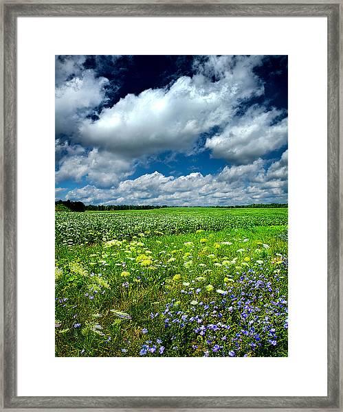 Dreaming Of Summer Framed Print