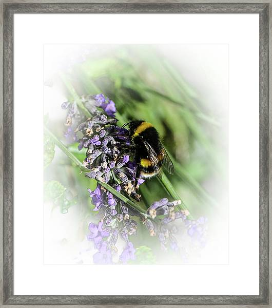 Dreamy Bumble Bee Framed Print