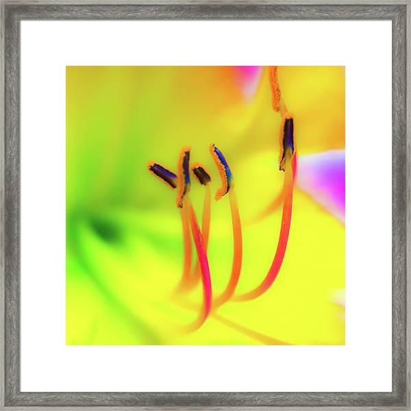 Dreamy Daylily Framed Print