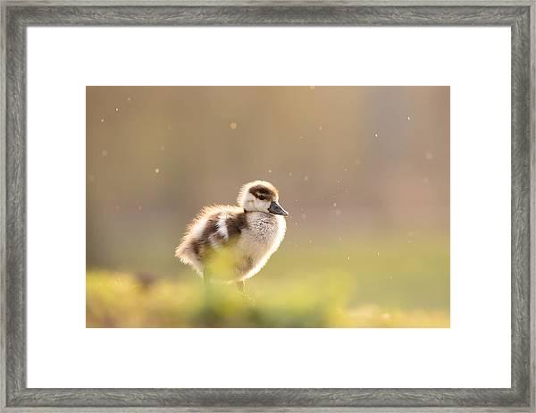 Dreamy Duckling Framed Print