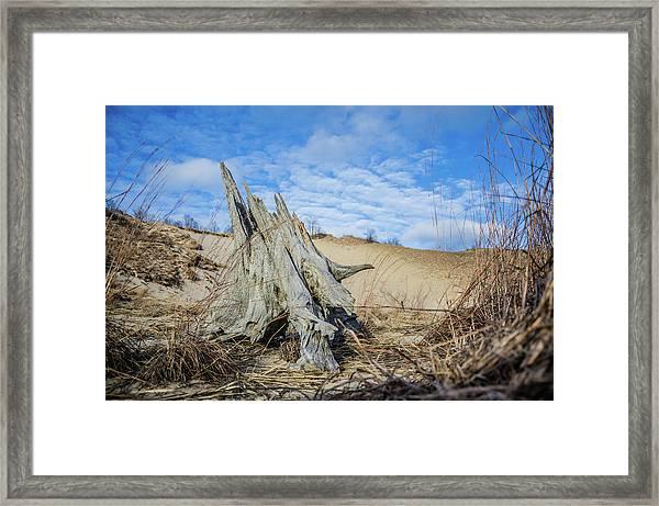 Dried Stump At Warren Dunes Framed Print