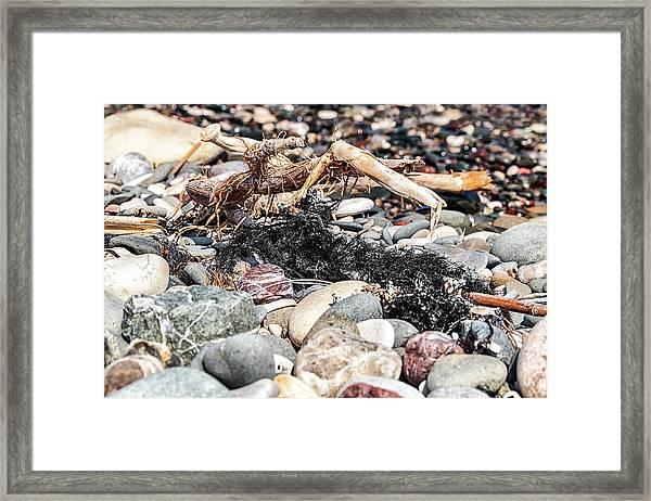 Drift Weed Framed Print