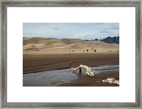 Drift Wood And Dunes Framed Print