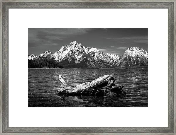 driftwood and Mt. Moran Framed Print