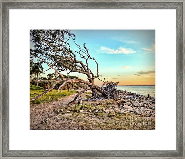 Driftwood Beach Morning 2 Framed Print