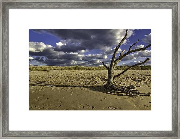 Driftwood II Framed Print