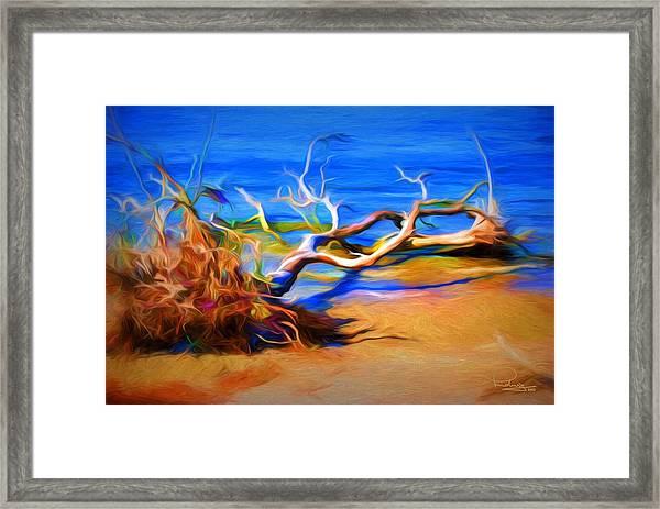 Driftwood Framed Print