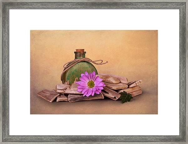 Driftwood With Daisy Framed Print