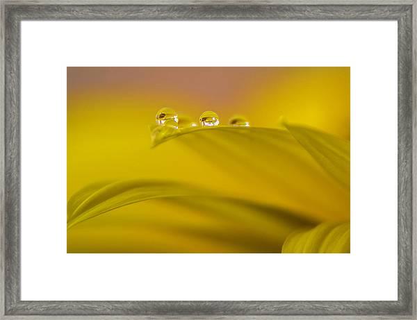 Drops Resting On A Leaf Framed Print