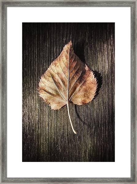 Dry Leaf On Wood Framed Print