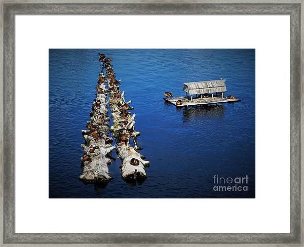 Duck Drop-inn Framed Print