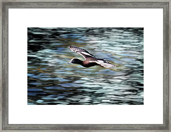 Duck Leader Framed Print
