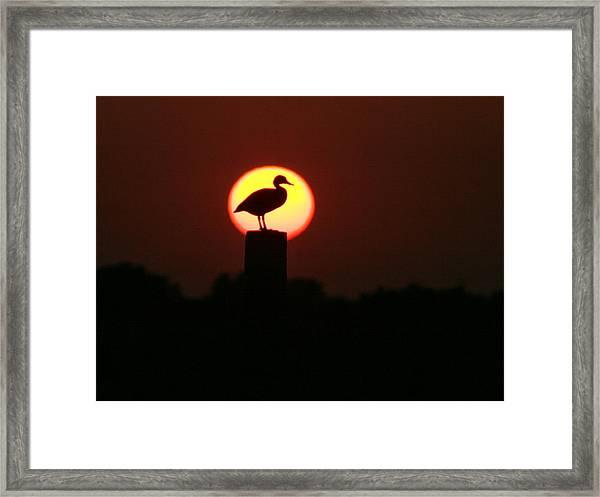 Duck On A Post Framed Print