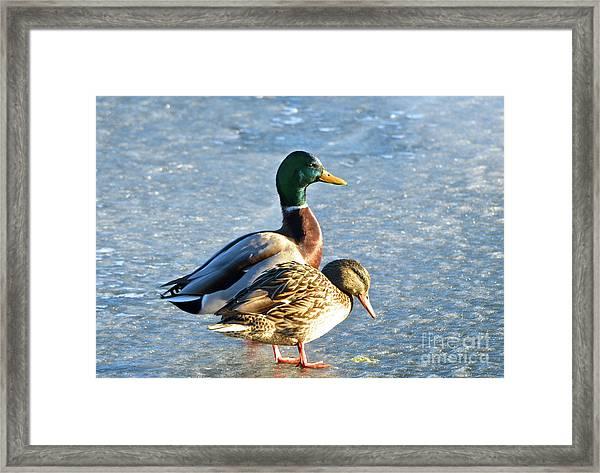 Duck Pair On Frozen Lake Framed Print