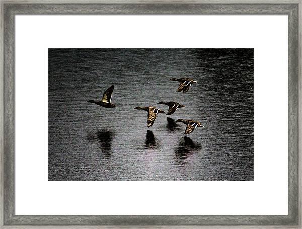 Duck Squadron Framed Print